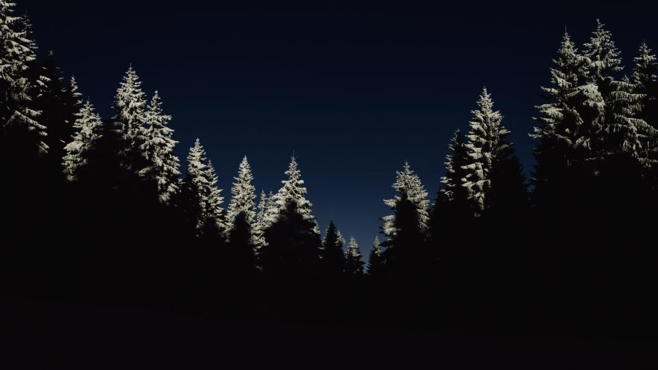 nature landscape woods forest trees dark night