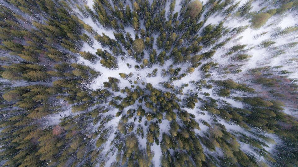 tree plant rorest snow winter cold aerial view