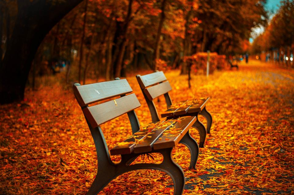 autumn fall park bench wood leaves colors trees