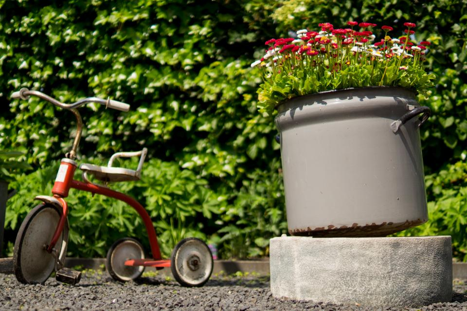 tricycle pots flowers garden leaves