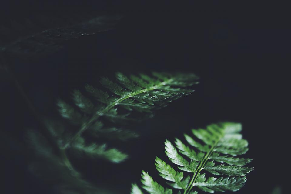 dark green leaves plant nature blur