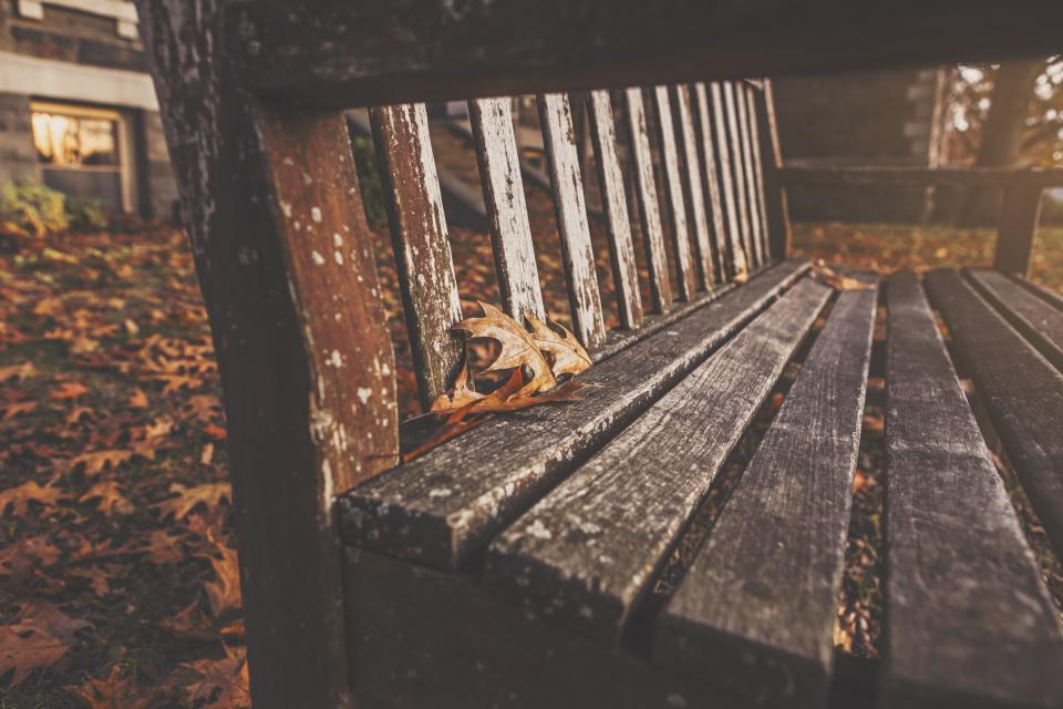 wood bench leaves