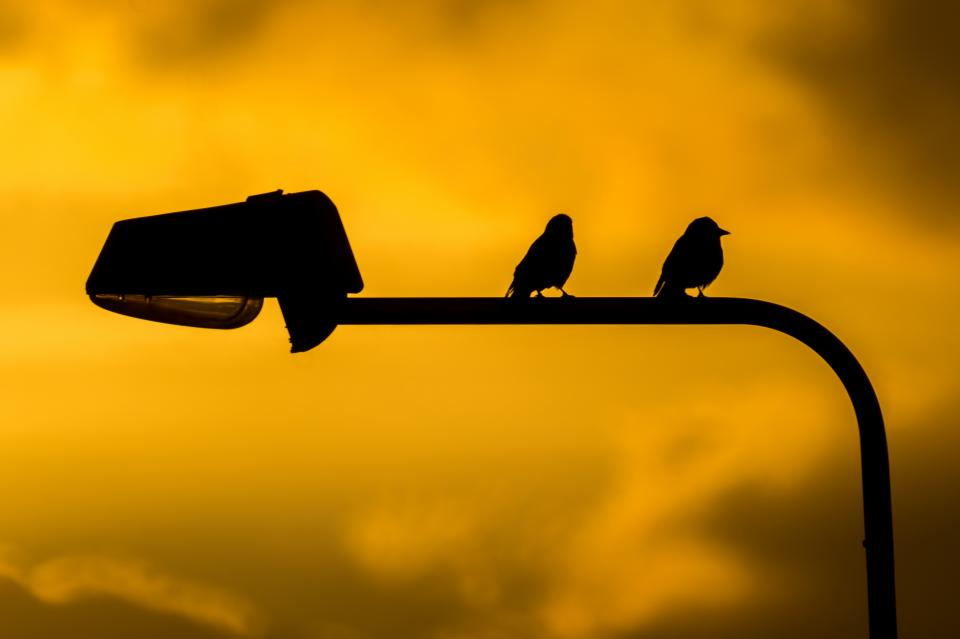 birds lamp post silhouette sunset dusk sky clouds