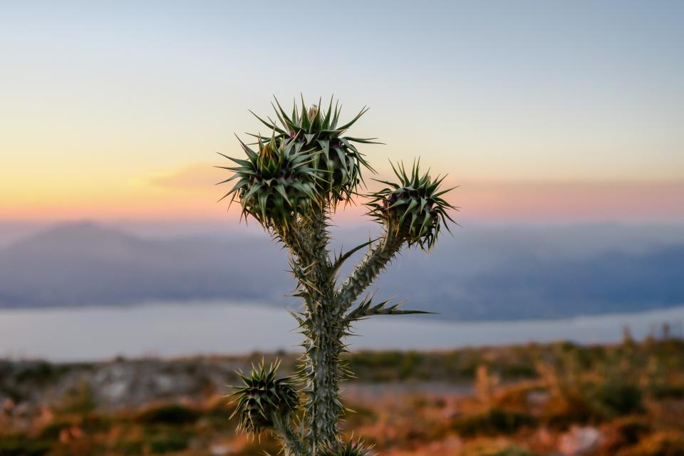plant nature mountain sea ocean sun sunny sunset sunrise cactus
