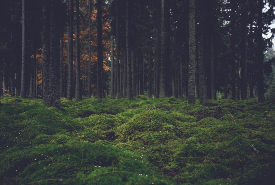 green grass woods forest trees nature
