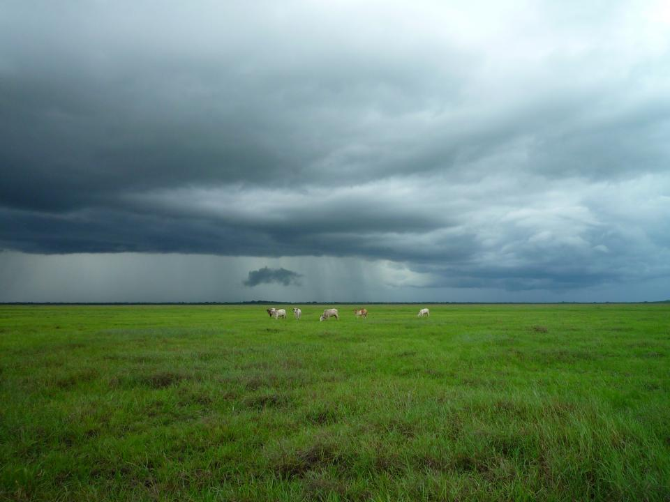 animals farm grass fields country clouds dark storm green