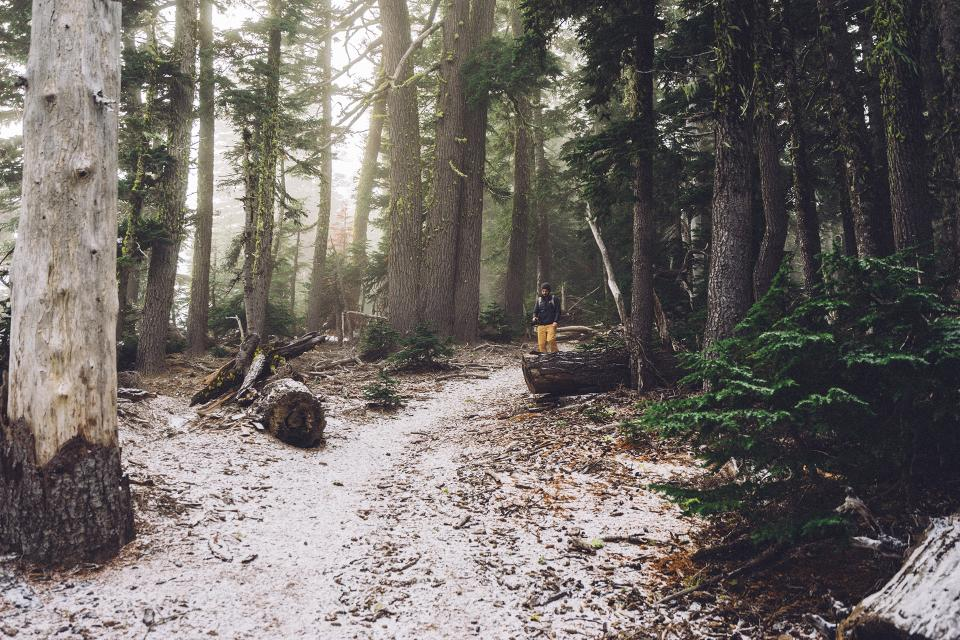 hiking trek trail woods forest nature trees path snow cold winter man