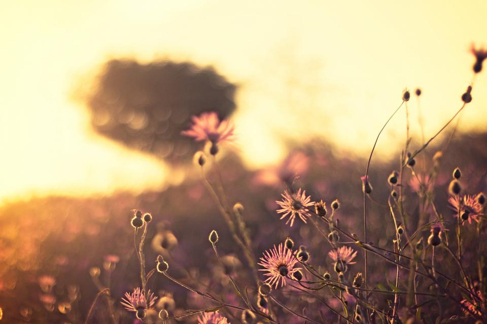 nature field wild grass flowers harvest sway sky  dusk outdoors bokeh