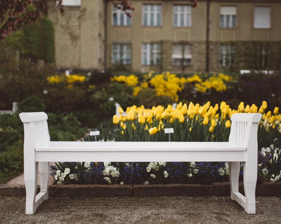 yellow flower tulips garden outdoor nature plants white bench