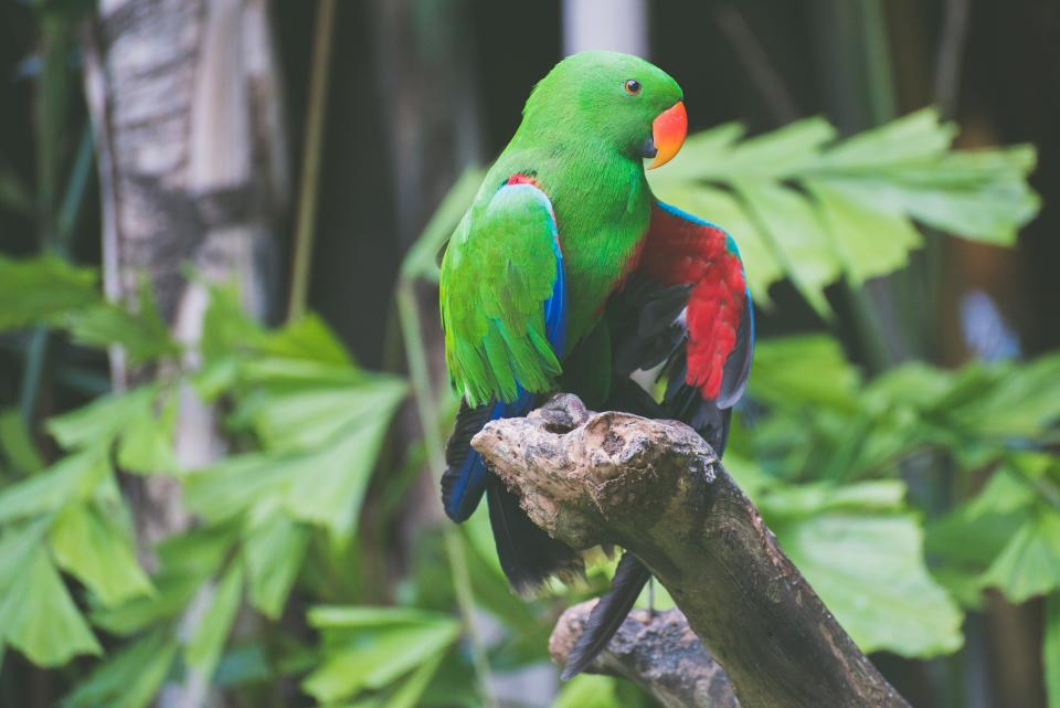 bird animal parrot branch trees plants green leaves beak colorful garden