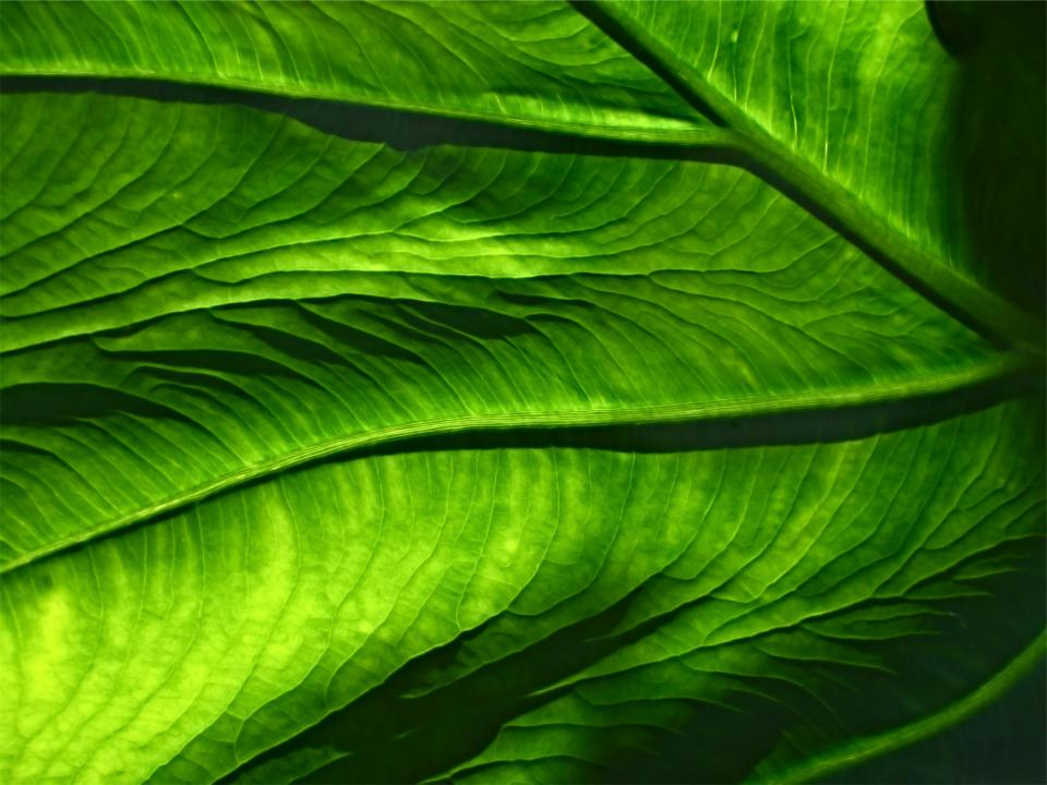 green leaf leaves