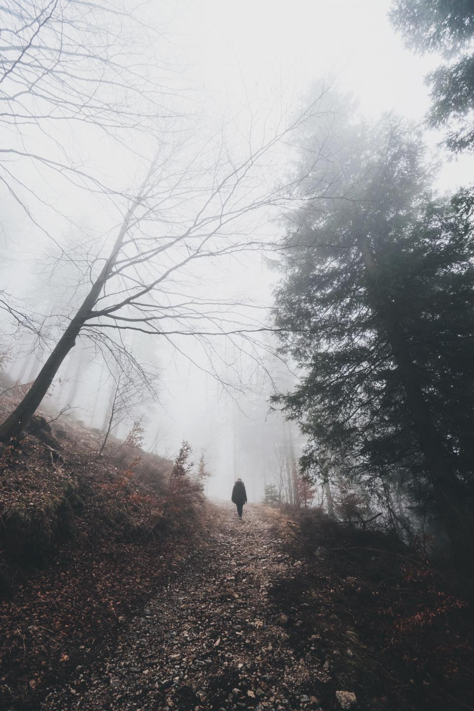 people travel adventure woods forest mountain climb hike trek nature alone trees plants foggy landscape