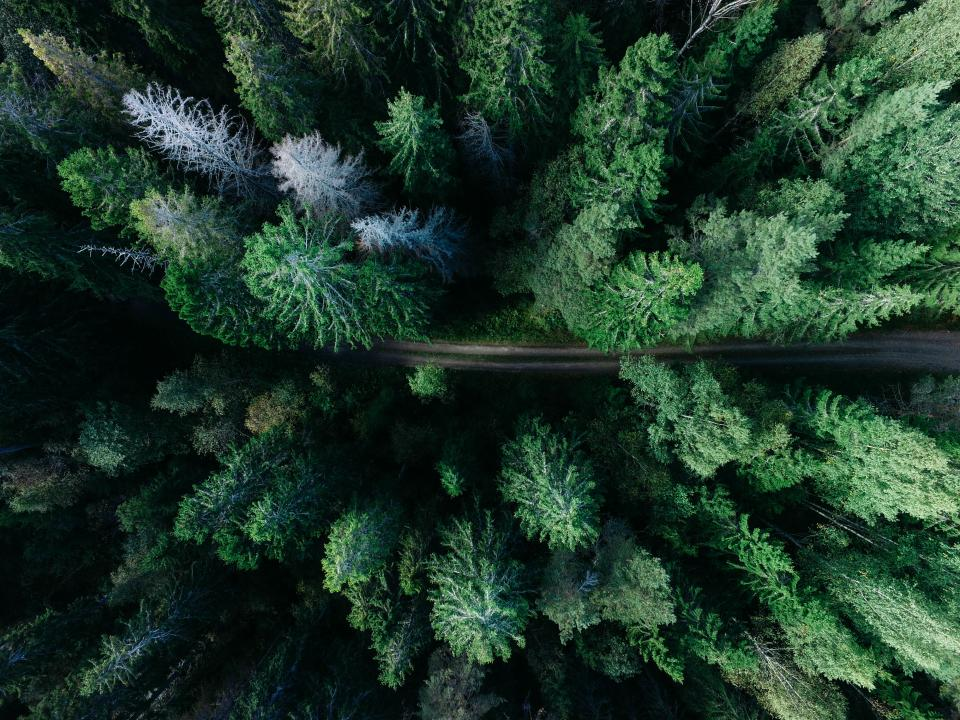 road green trees nature outdoors aerial view