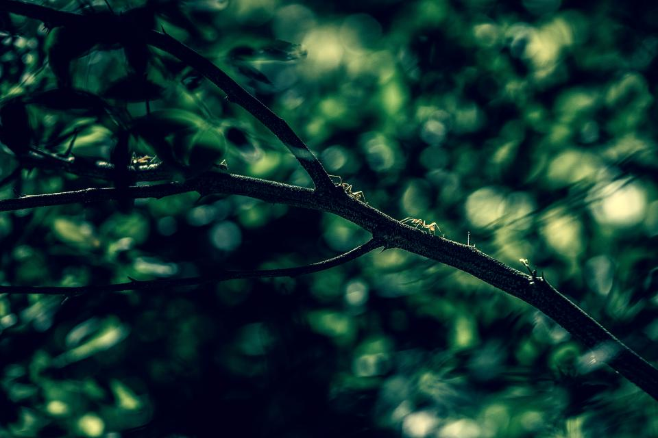 nature trees branches leaves bokeh still green