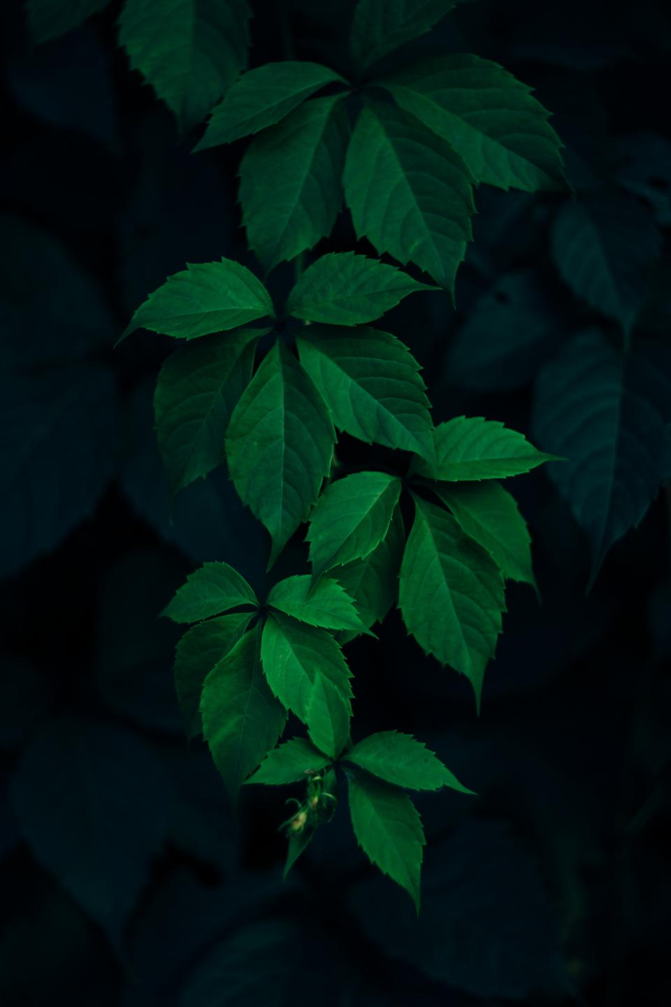green leaf dark plant blur nature