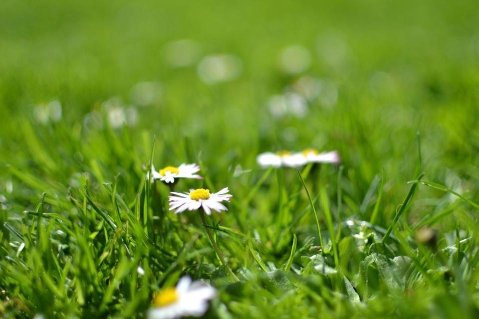 flowers nature blossoms wild grass white ground outdoors bokeh still