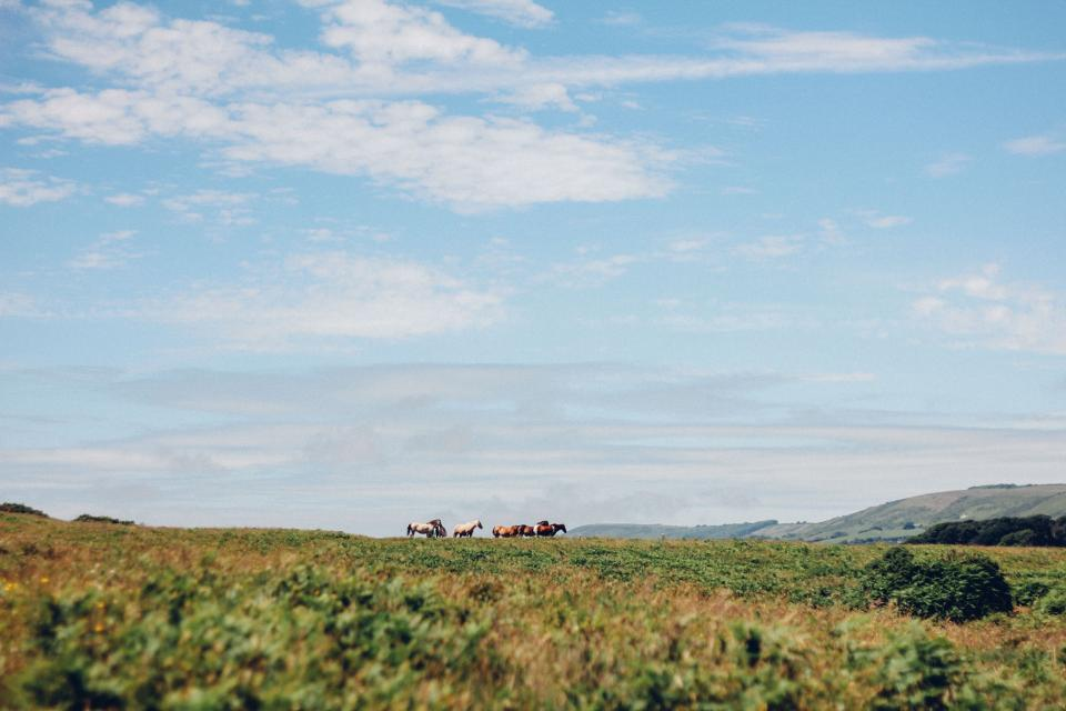 green grass herd animal horse highland landscape blue sky clouds outdoor nature