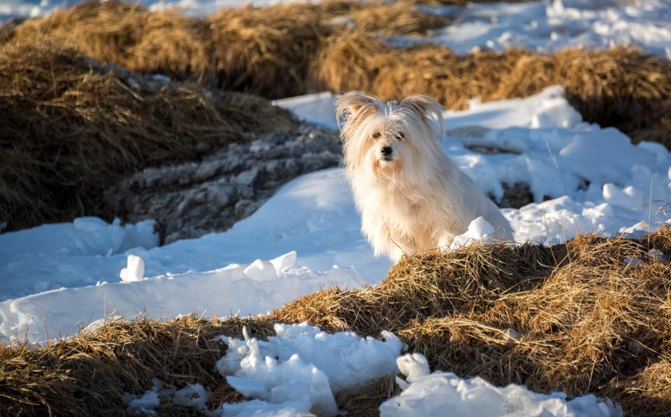 dog puppy animal pet outdoor grass snow winter