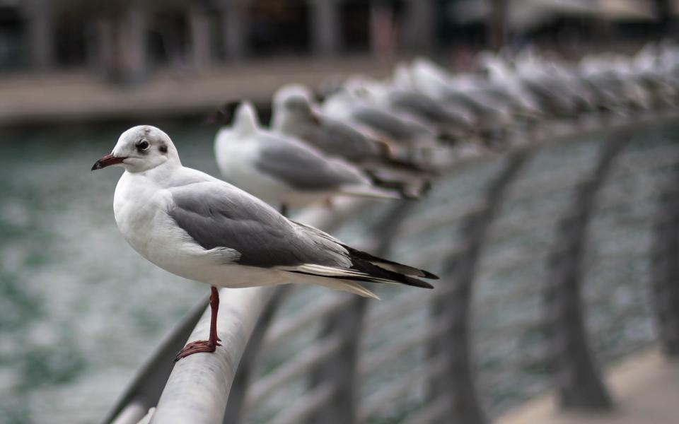animal birds seagull water fence steel bokeh blur feather line