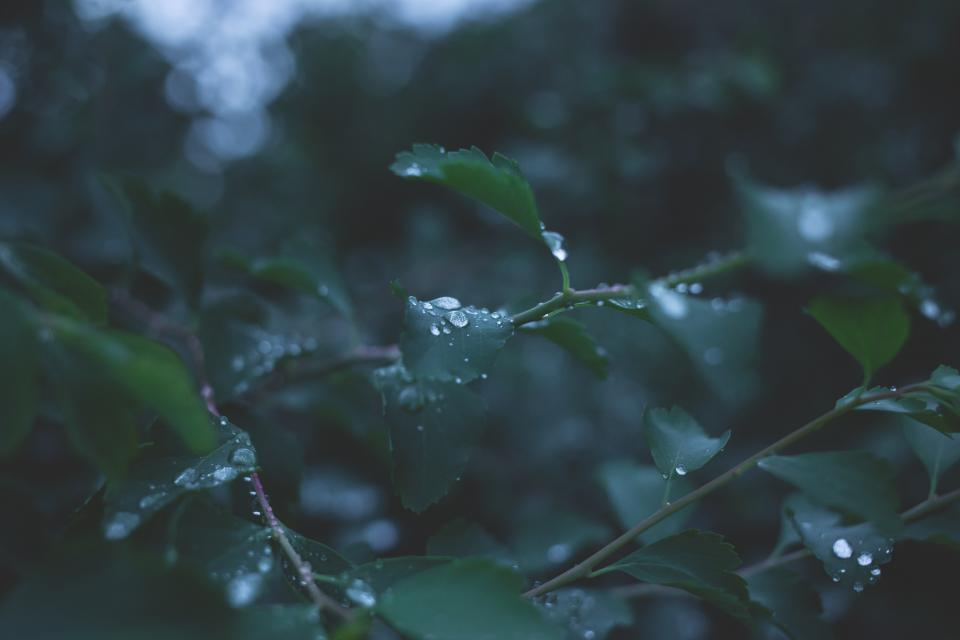leaves plants raining wet dew nature forest green dark