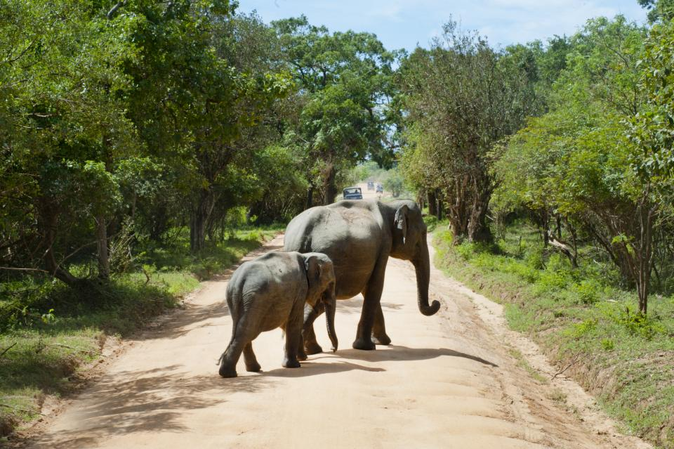 wildlife nature mammal animal forest road elephant sunny day trees plant