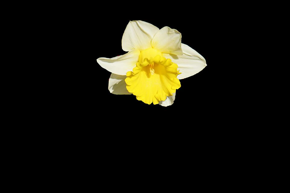 dark flower plant petal yellow white