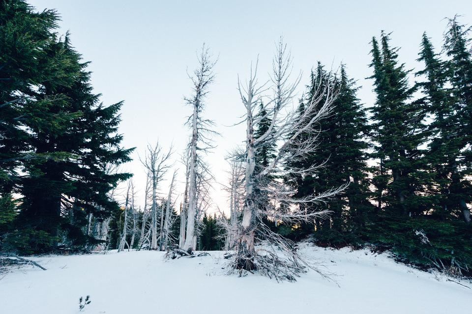 trees forest snow winter cold sky nature outdoors christmas