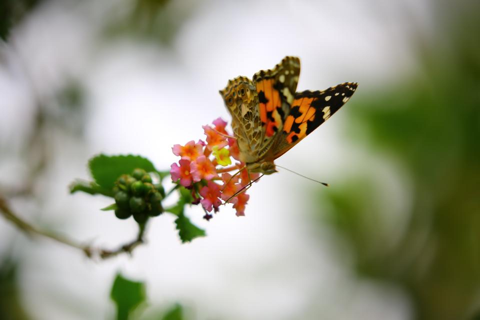 butterfly tropical flower bloom nature leaves insect blur