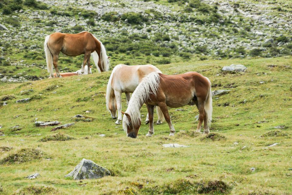 horses animals hair manes grass fields