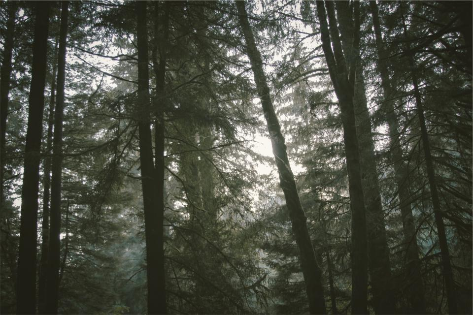 forest trees woods nature
