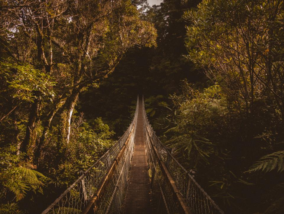 hanging bridge outdoor travel green plants trees nature forest