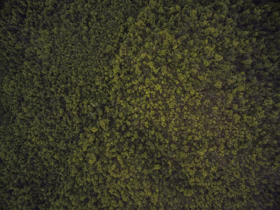 nature landscape aerial woods forest green trees travel adventure