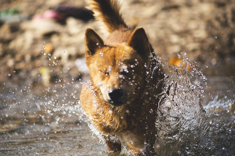 animals dogs domesticated pets eyes closed muzzle run happy cute adorable water stream splash still bokeh