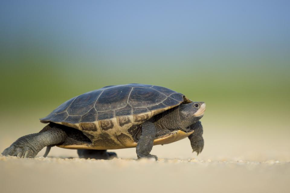 animals amphibians turtles house shell legs walk crawl adorable cute still bokeh