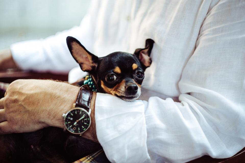 dog animals guy man watch fashion people