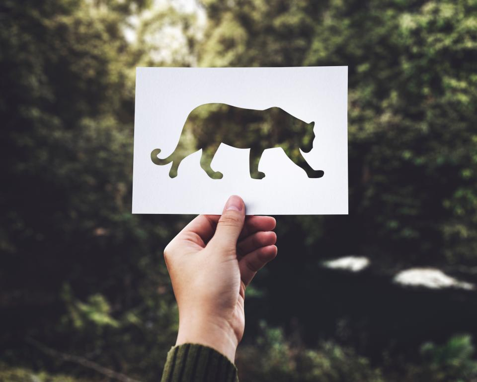 paper lion drawing nature outdoor tree plant hand arm blur