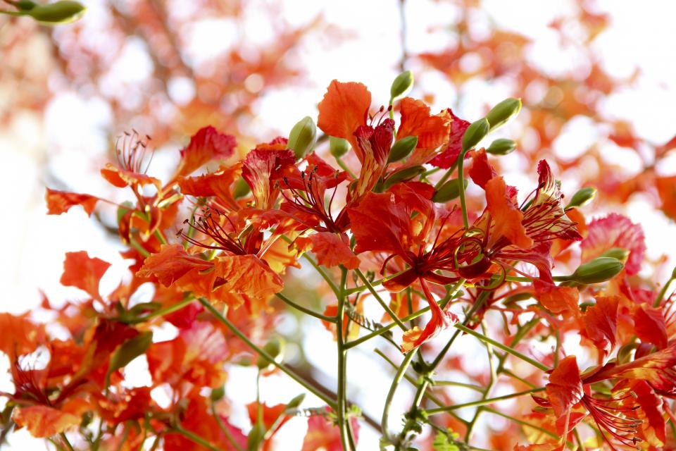 flowers nature blossoms branches stems stalk red petals bokeh outdoors garden