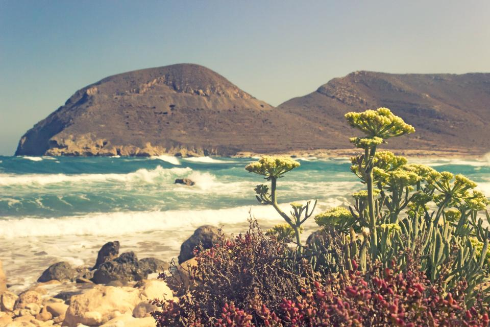 coast ocean sea water seashore plants flowers summer mountain rocks nature waves sky