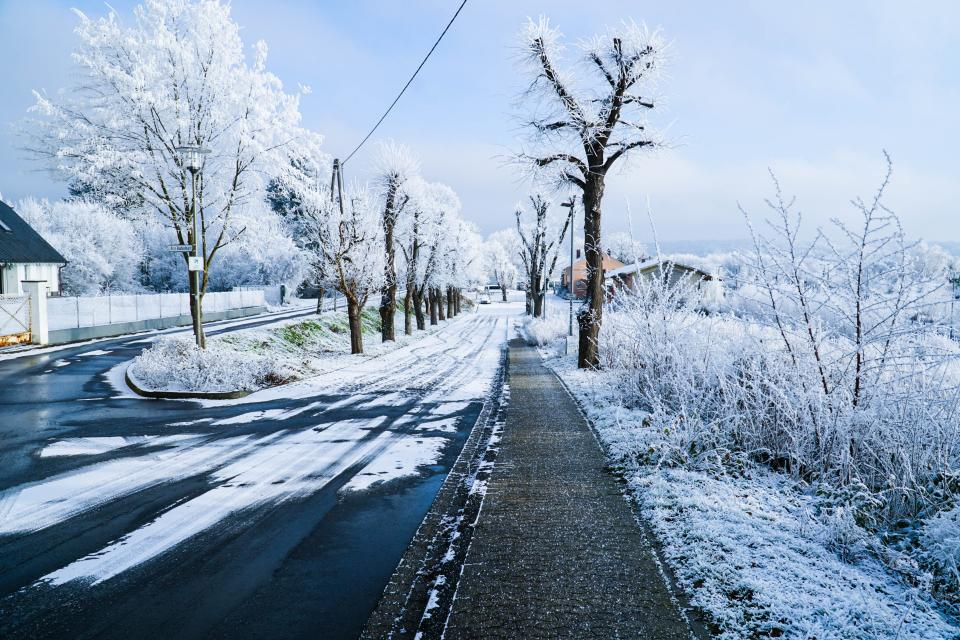 snow winter white cold weather ice trees plants nature road household