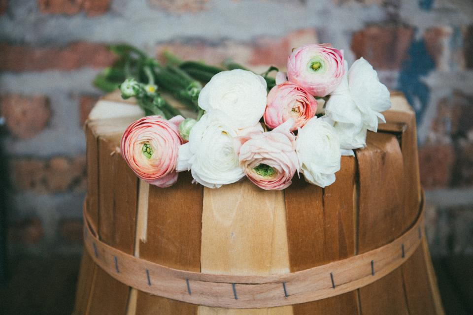 white pink petal roses flower plant nature wood wall