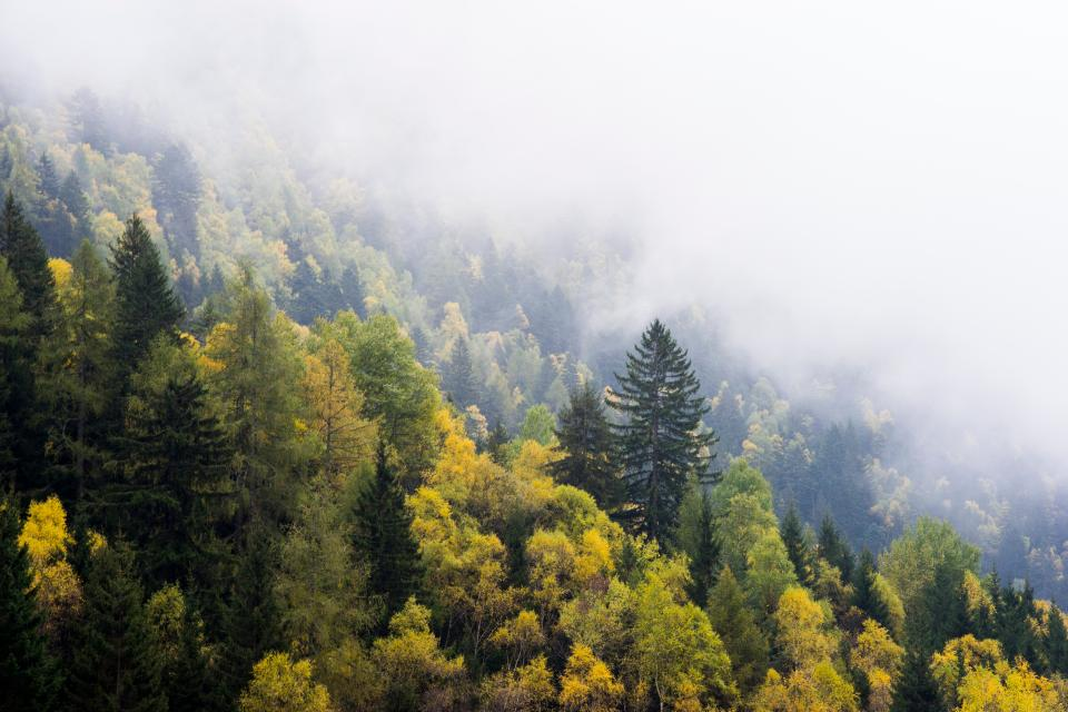 tree plant nature autumn fall forest mountain landscape fog cold
