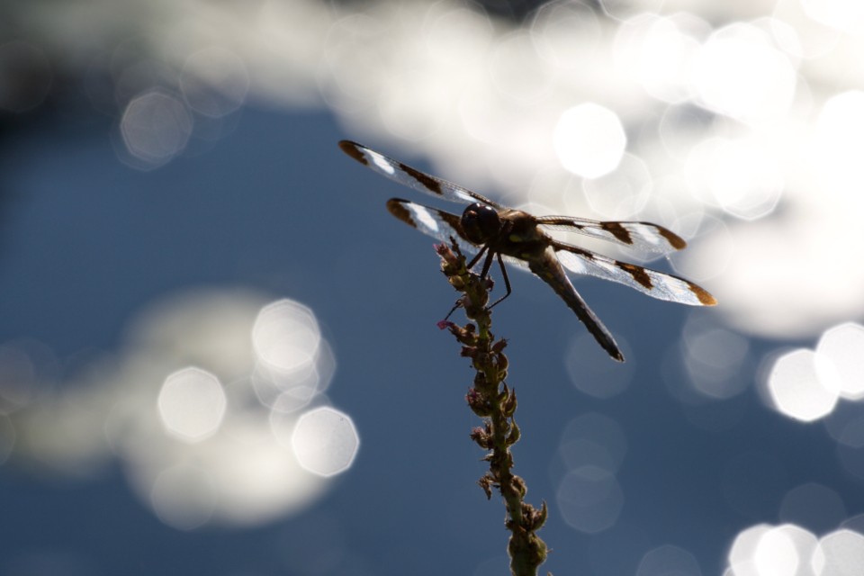 dragonfly close up nature insect animal bug wings detail natural wildlife macro bokeh outdoor