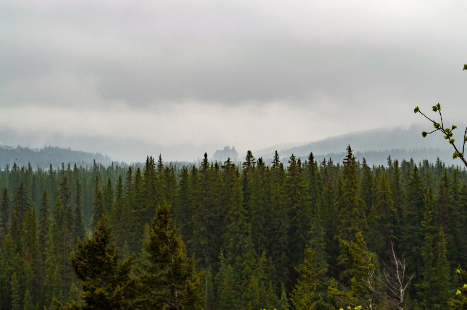 nature landscape mountains forests trees pine top sky clouds fog