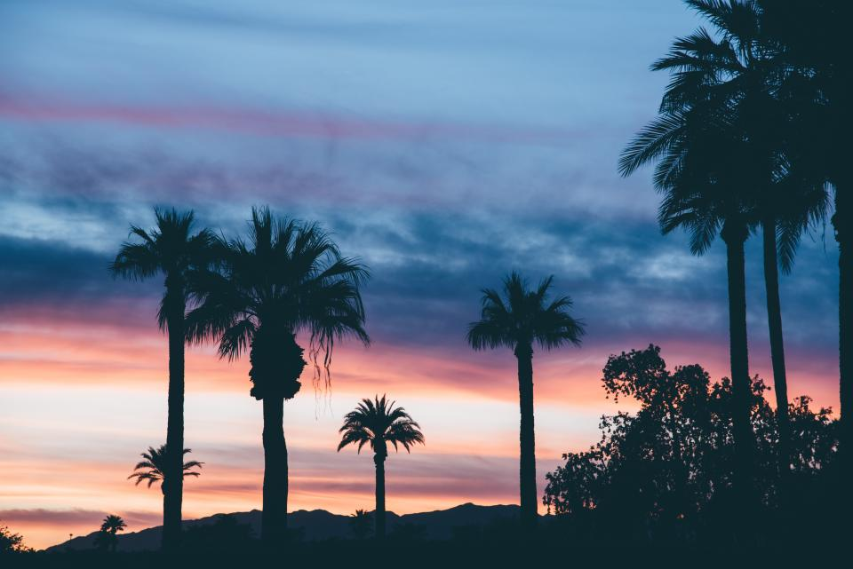 sunset dusk silhouette palm trees clouds nature sky