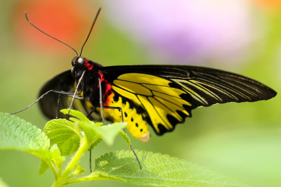 butterfly insect colorful nature green leaves plant sunlight sunny summer blur