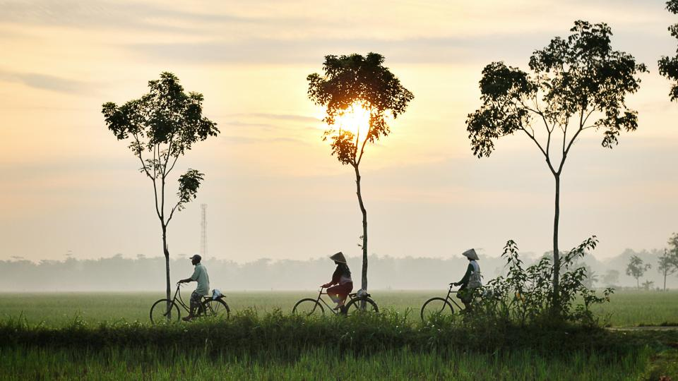 nature landscape trees grass green field sunset people bike bicycle exercise