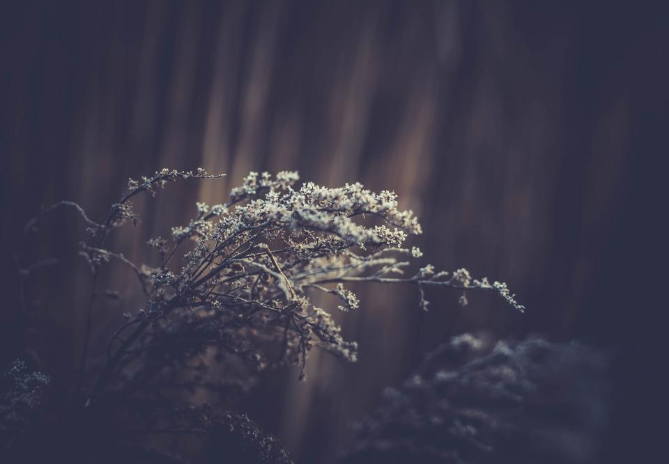 nature plants branches twigs flowers blossoms trees still bokeh black and white
