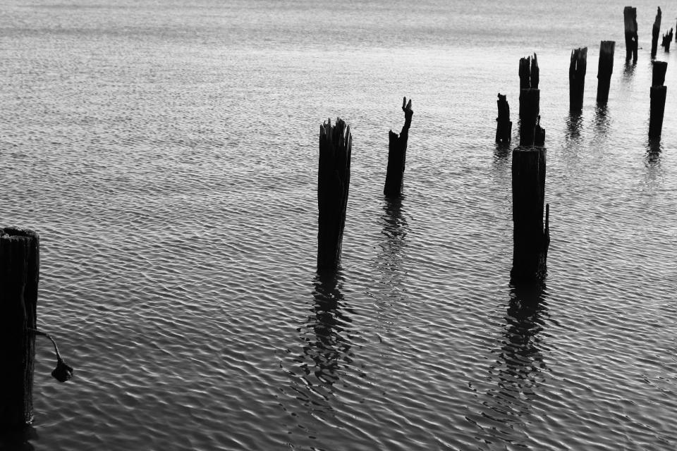 wood pillars water ripples black and white