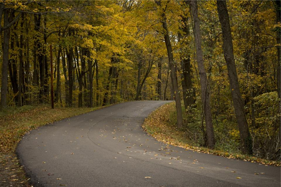 winding road pavement autumn fall trees leaves forest woods nature