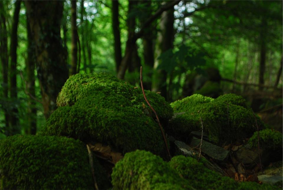 green moss forest trees woods nature